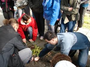 sadzenie cebulek 1