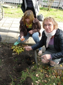 sadzenie cebulek 3