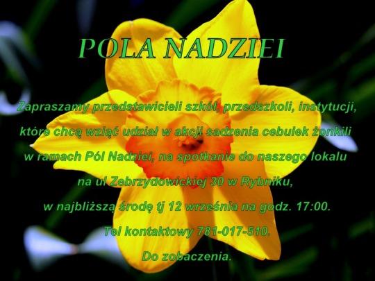 1-narcissus-695530_960_720-001